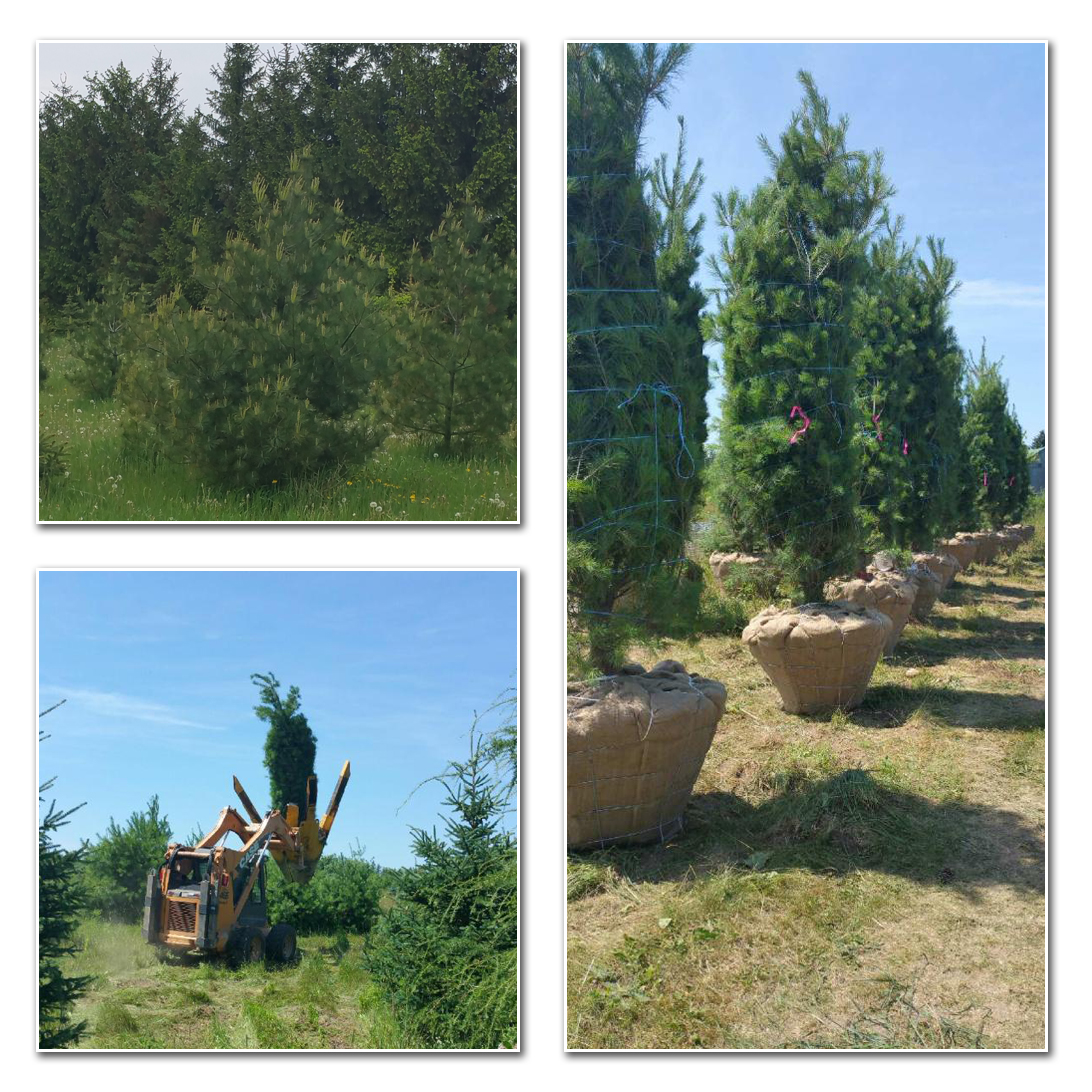 Landscape Trees Page